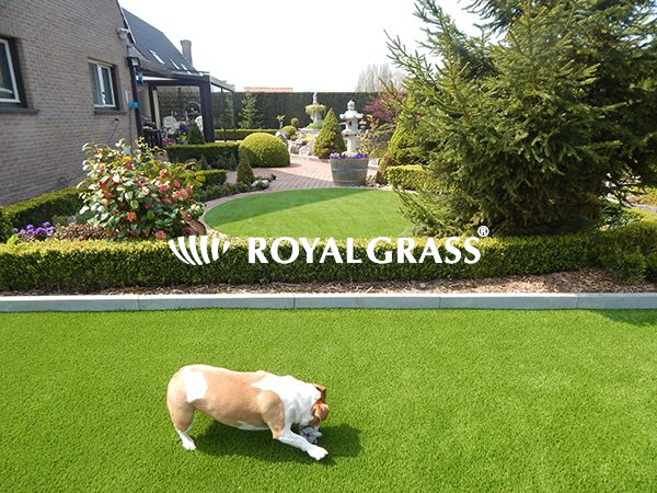 Project: Hond speelt op Royal Grass® te Ieper