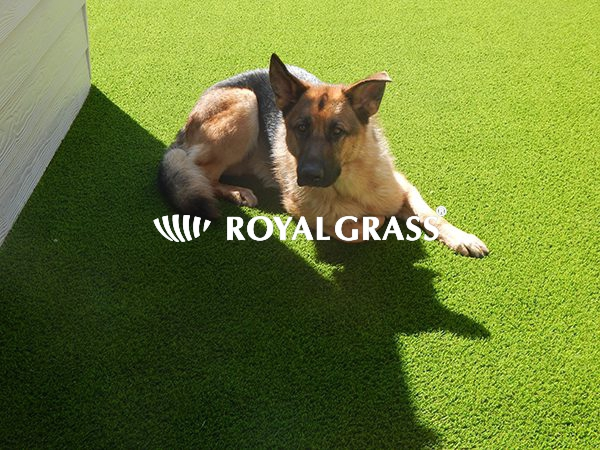 Project: Kunstgras is perfect voor honden te Oostende