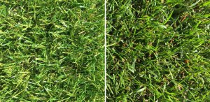 Royal Grass® Sense en natuurgras
